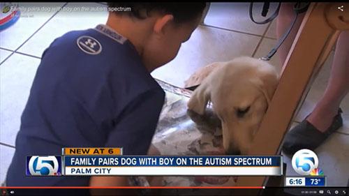 Autism Service Dogs Autism Assistance Dogs Autism Alert Dogs