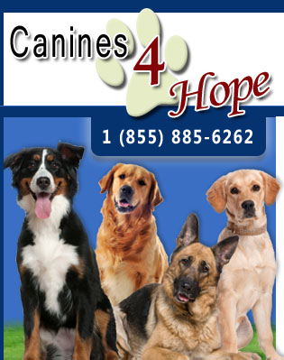 therapy dogs, therapy dog training, service dog trainer florida