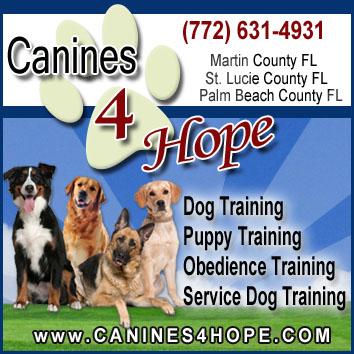 Obedience Ptsd Service Dog Training