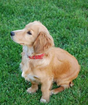 Dog Training Stuart FL, Dog Obedience Trainer Port St ...