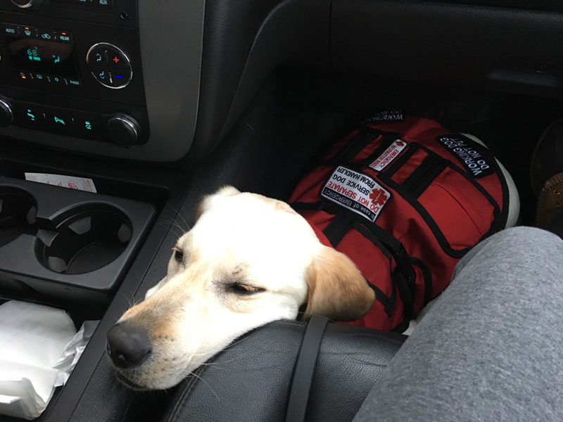 In case of emergency DO NOT separate Service Dog from Handler.