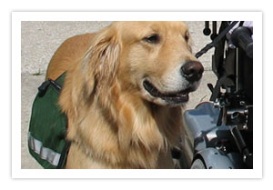 Assistance Dogs - Stability Assistance Dogs